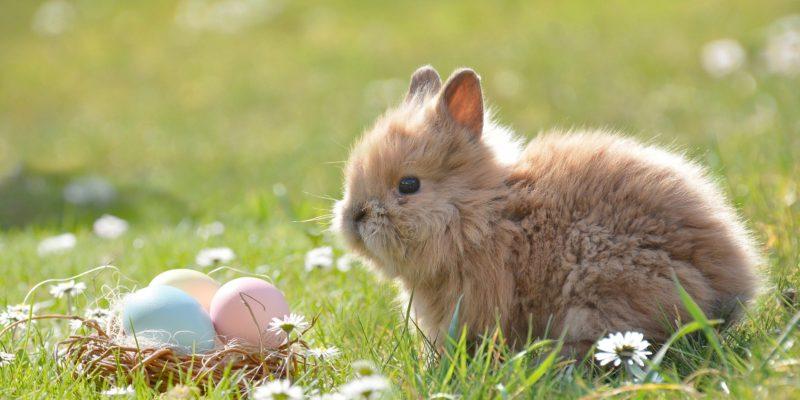 Österliche Fruchtbarkeit - von Eiern, Hasen und Mutterzwang